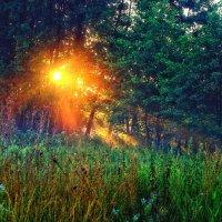 лучи солнца.. :: юрий иванов