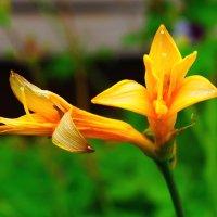 цветение :: vg154