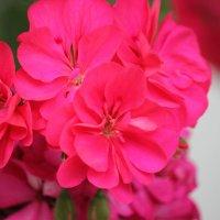 Цветочный хоровод-285. :: Руслан Грицунь