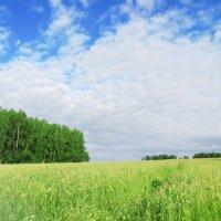 поле :: Анастасия Долгополова