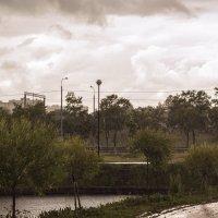 Июльский дождь :: Aнна Зарубина
