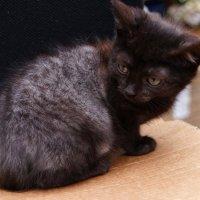 Котечка :: kolyeretka