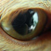 Камера видеонаблюдения нашего Рыжика :: ФОТО ОХОТНИК