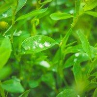 После дождя, трава мокрая. :: Света Кондрашова