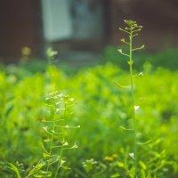 Солнечное утро,сонная трава. :: Света Кондрашова
