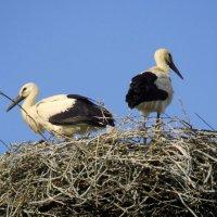 ждем маму! :: linnud