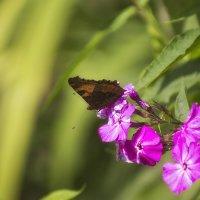 бабочка :: Stas Malyshev