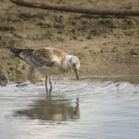 чайка :: Stas Malyshev