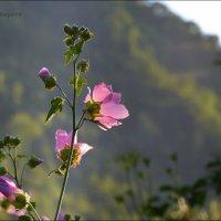 Цветочки в горах. :: Anna Gornostayeva