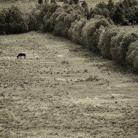 loneliness :: Aleksandr Tishkov