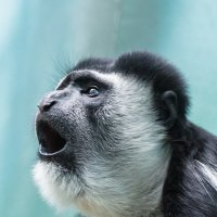 Из жизни приматов :: Igor Yakovlev