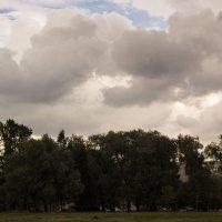 Перед дождём :: Aнна Зарубина