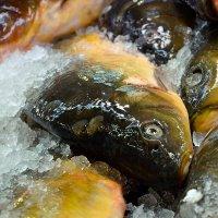 Рыбы :: Юрий Эпштейн