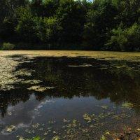 Есть в графском парке черный пруд :: Алексей Михалев