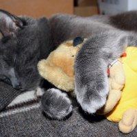 Спят усталые игрушки.... :: Валерия  Полещикова