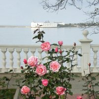 Розы на Приморском бульваре :: Эля Юрасова