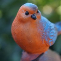Птица :: Александр Дёмин