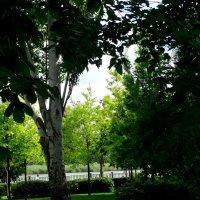 Летом на набережной... :: Тамара (st.tamara)