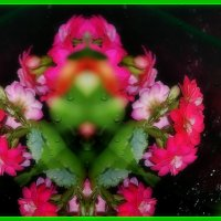 Цветочный терминатор :: Валерий Лазарев