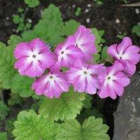 Цветочный хоровод-301. :: Руслан Грицунь
