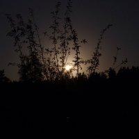 beautiful evening :: Андрей Туксунов