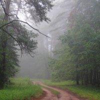 Лесною тайной утренний туман... :: Лесо-Вед (Баранов)