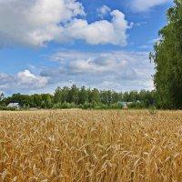 Будет  хлеб. :: Валера39 Василевский.