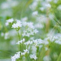 маленькие цветочки2 :: AllaSaa