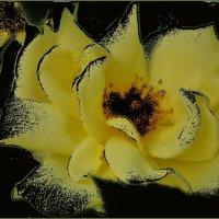 Медовая роза :: Нина Корешкова