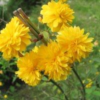 Цветочный хоровод-310. :: Руслан Грицунь