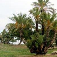 Пальмовый букет :: Герович Лилия