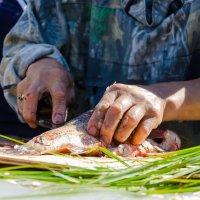Разделка рыбы :: Николай Бирюков