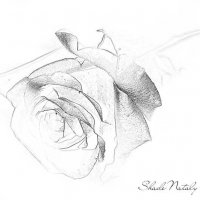 Роза в карандаше :: Наталья (ShadeNataly) Мельник
