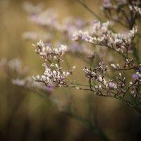 Сухоцветики полевые... :: Роман *******