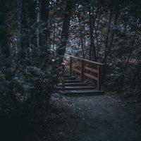 Путь :: Daria Snow