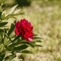 Цветок :: Елена Кознова
