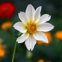 Цветок :: Леонид Никитин