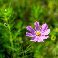 Летний цветок :: Андрей Куприянов