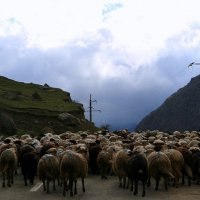 Верхняя Балкария :: Tata Wolf