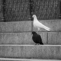 Черное и белое :: Дмитрий Сорокин