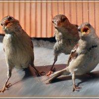 трио :: linnud