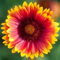flower_94 :: Trage