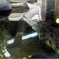 Крокодил :: Вера