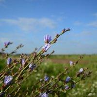 Цветочки, просто цветочки :: Сергей Elf N
