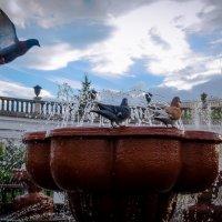 фонтан :: Кирилл Богомазов