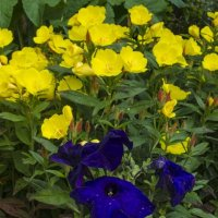 букет в саду :: ник. петрович земцов