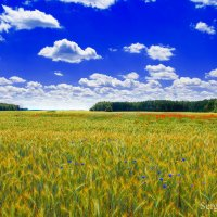 Лето в деревне :: Сергей Хомич