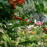 В нашем дворе улыбается лето... :: Нина Корешкова