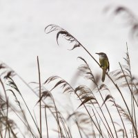 Птичка- невеличка :: Tatsiana Latushko