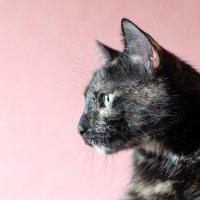 Кошка Матуля :: Ирина Луганская